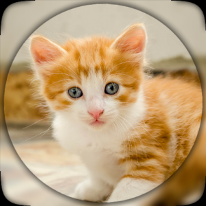 Cute cat, Pussy Cat live wallpaper HD Icon