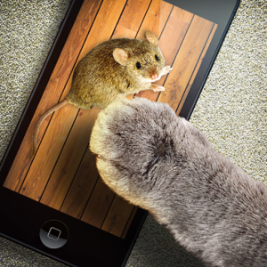 Mouse game toy for cats Icon