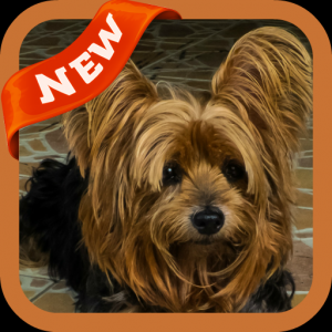 Yorkshire Terriers Wallpaper Icon