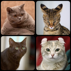 Cat Breeds Quiz - Game about Cats. Guess the Cat! Icon