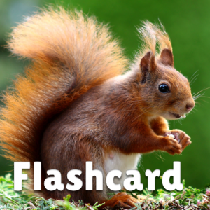 Animal flashcard & sounds for kids & toddlers Icon