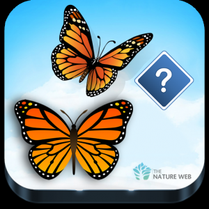 Guess the Butterfly-Photo Quiz Icon