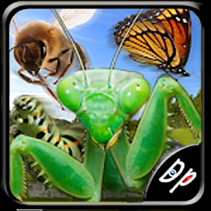 Insect Race Icon