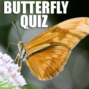 Quiz : What Butterfly Are You ? Icon